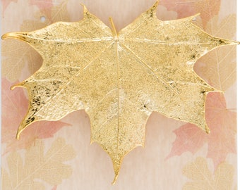 Real Sugar Maple Leaf Dipped In 24k Gold Pins