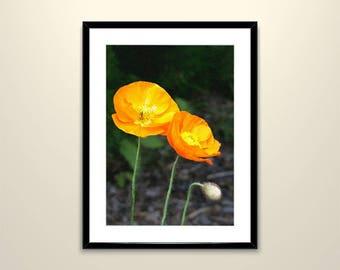 Orange Poppies Printable Art, Digital Download