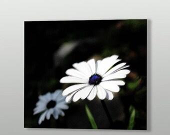 White Daisy Art Print on Paper
