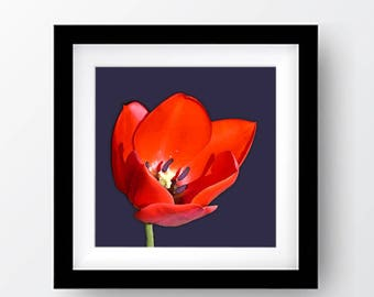 Red Tulip Printable Art, Digital Download, Floral Art
