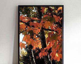 Autumn Maple Leaves Printable Art, Digital Download