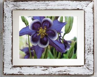 Columbine Flower Printable Art, Digital Download