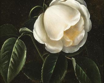 Midnight Garden Perfume Oil - Night flowering Tuberose, Honeysuckle, Gardenia, and Lily