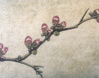 Original Woodblock Reduction Print - Quince No. 1 hand-pulled woodblock moku haga fine art print matted and ready to frame