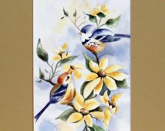 Brown/Blue Birds