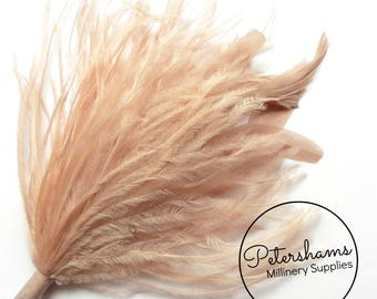 Ostrich & Stripped Coque Feather Millinery Fascinator Hat Mount - Latte
