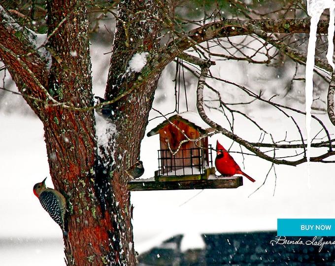 Birds in Tree Morehead Kentucky Giclee Print on Fine Art Paper Canvas or Wood by Brenda Salyers by Brenda Salyers