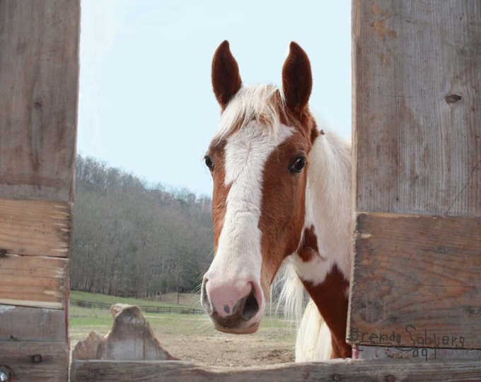 Curious Morehead Kentucky Fine Art Print on Paper Canvas or Wood by Brenda Salyers by Brenda Salyers