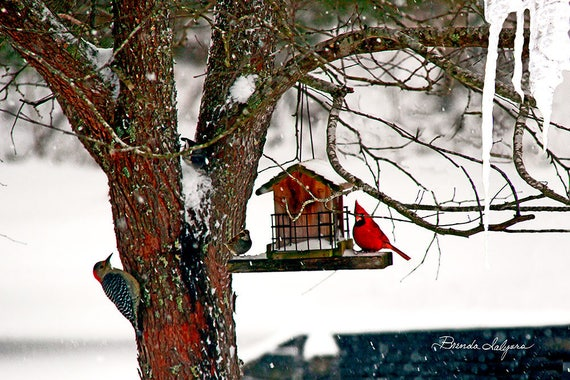 Kentucky Birds in Backyard. Includes cardinals and woodpeckers,Print on canvas.