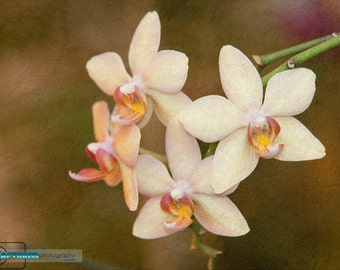 Orchid Bunch (8x10)