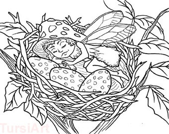 12 Sleeping Fairy In Robins Nest Coloring Postcards One Dozen Cards To Color And Mail Page Mailart By TursiArt Robin Egg