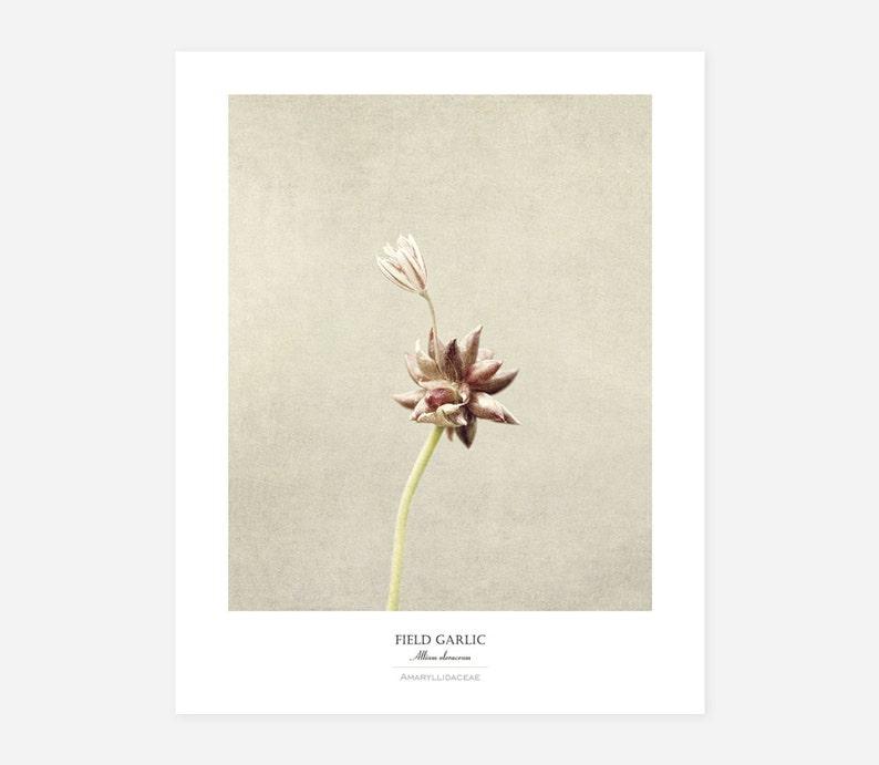 Botanical Photography Art Print  Framed Botanical Wall Art  image 0