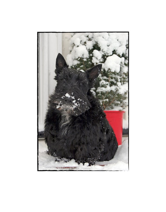 Scottie Dog Holiday Greeting Card Scottish Terrier Christmas Etsy