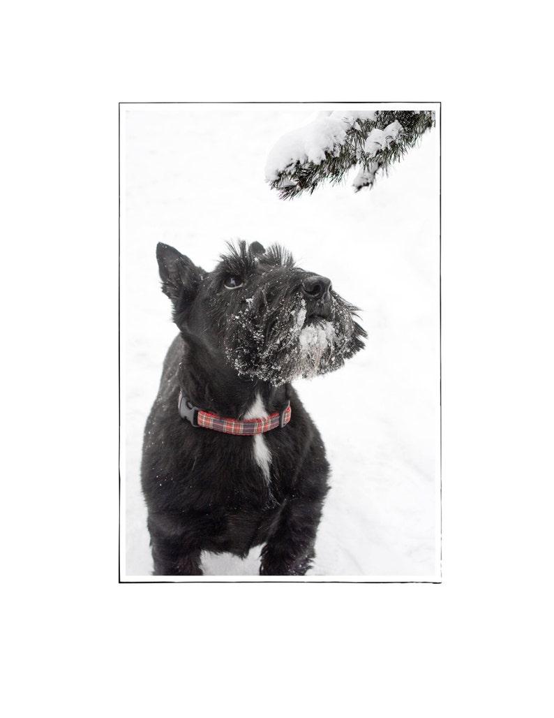 Scottish Terrier Christmas Card  Scottie Dog Holiday Card  image 0