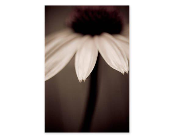 Flower Photography Art Print Sepia Wall Art Framed Plant | Etsy