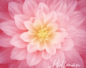 Hoffman - Dream Big - Floral - Wild Rose - Digital Print - 42 quot Square Panel - Cotton Fabric by the Panel P4389-94