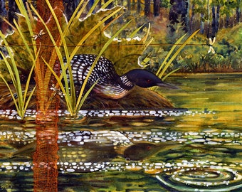 May Loon Nesting - Common Loon - Limited Edition Reproduction Giclee Print in 16x20 black mat