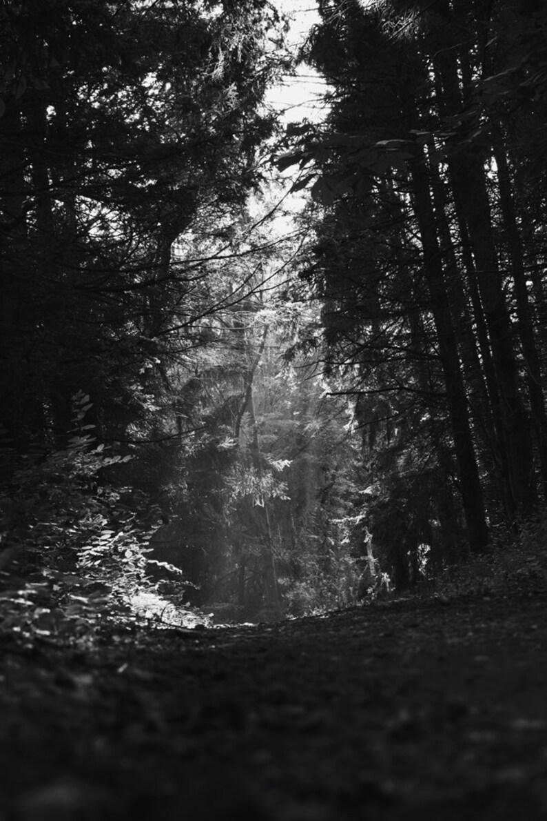 Deep woods photograph heavenly path black white fine art etsy