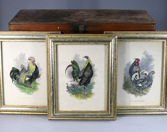 Vintage Chicken And Rooster Prints In Gold Wood Frames Etsy