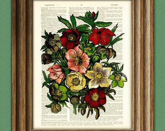 The Buttercup Garden Flower botanical illustration beautifully upcycled dictionary page book art print