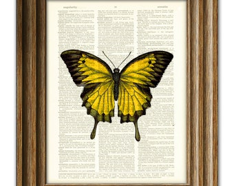 Beautiful Yellow Butterfly illustration beautifully upcycled dictionary page book art print