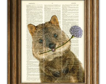 Quincy Quokka Australian friend illustration upcycled dictionary page book art print