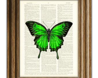 Beautiful Green Butterfly illustration beautifully upcycled dictionary page book art print