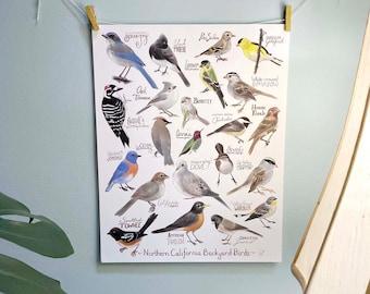 Backyard Birds of Northern California