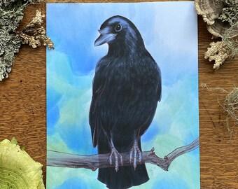 American Crow 8 x 10 Print
