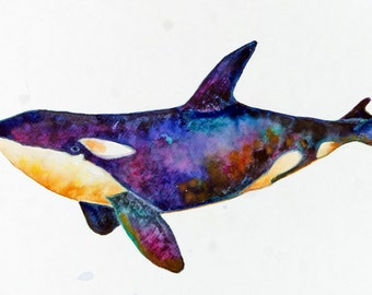 Signed Print of my Original Watercolor  - Killer Whale One - Watercolor Whales Series