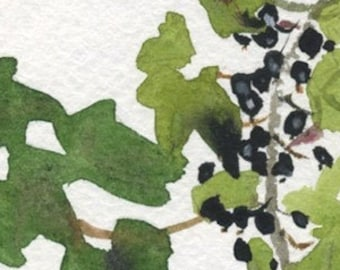 black currant is laying low, small garden original watercolor (free shipping)
