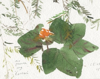 cloudberry and spruce, small forest original watercolor (free shipping)