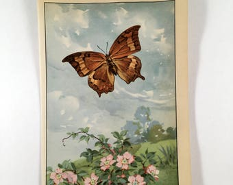 "1917 Vintage BUTTERFLIES /""SILVERY BLUE/"" BUTTERFLY COLOR Art Plate Lithograph"