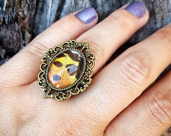 Sunset Moth ring - REAL moth wing, gold tone adjustable ring
