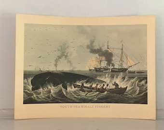 C.1960 WHALING - WHALE FISHERY - original vintage print - south sea fishing industry - color lithograph - slightly roll damaged