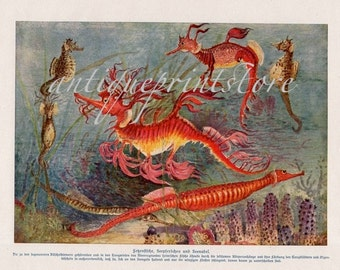 1912 extremely rare sea dragon seahorse original antique ocean print color lithograph