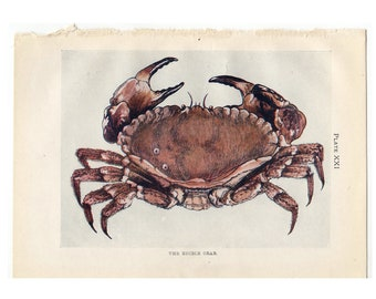 10.4x6.6 historical item Antique print of Crustaceans from 1865 antique colour lithograph print size ca