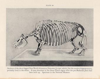 c. 1934 PREHISTORIC RHINOCEROS SKELETON print - vintage extinct animal print - Smithsonian Museum Natural History - dinosaur