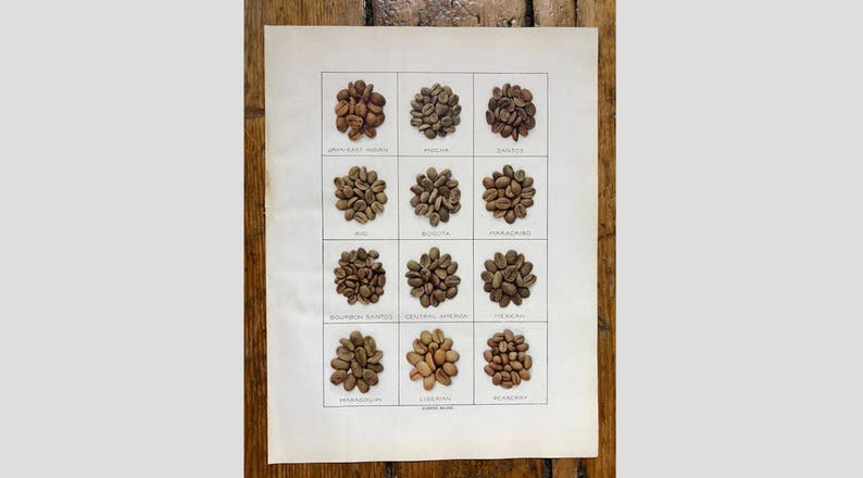 mocha coffee shop coffee print kitchen art java c  1911 COFFEE BEANS print original antique print lithograph coffee lover