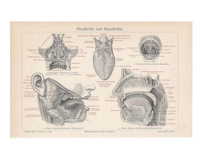 c. 1894 riechen menschliche Anatomie PRINT original antiken   Etsy
