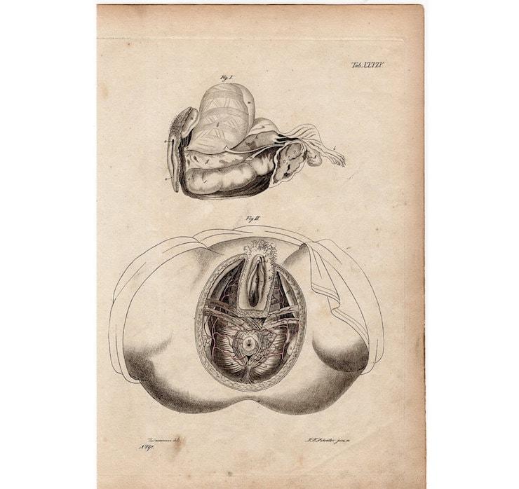 1820 menschliche Anatomie weibliche Becken original antiken