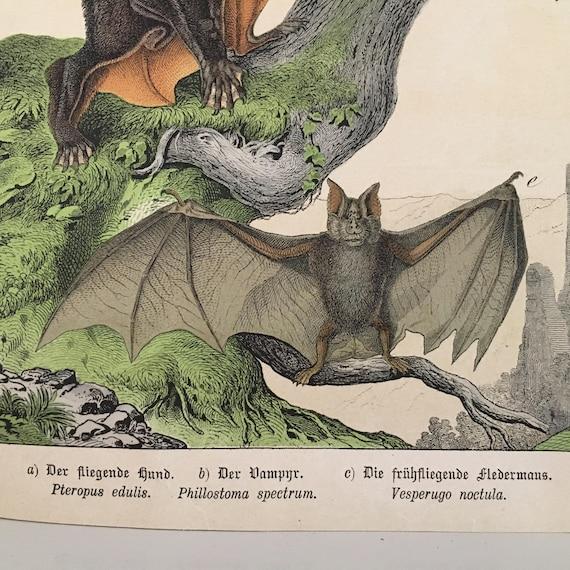1878 ANTIQUE BAT LITHOGRAPH original antique color lithograph print -  pipestrelle vampire fledermaus