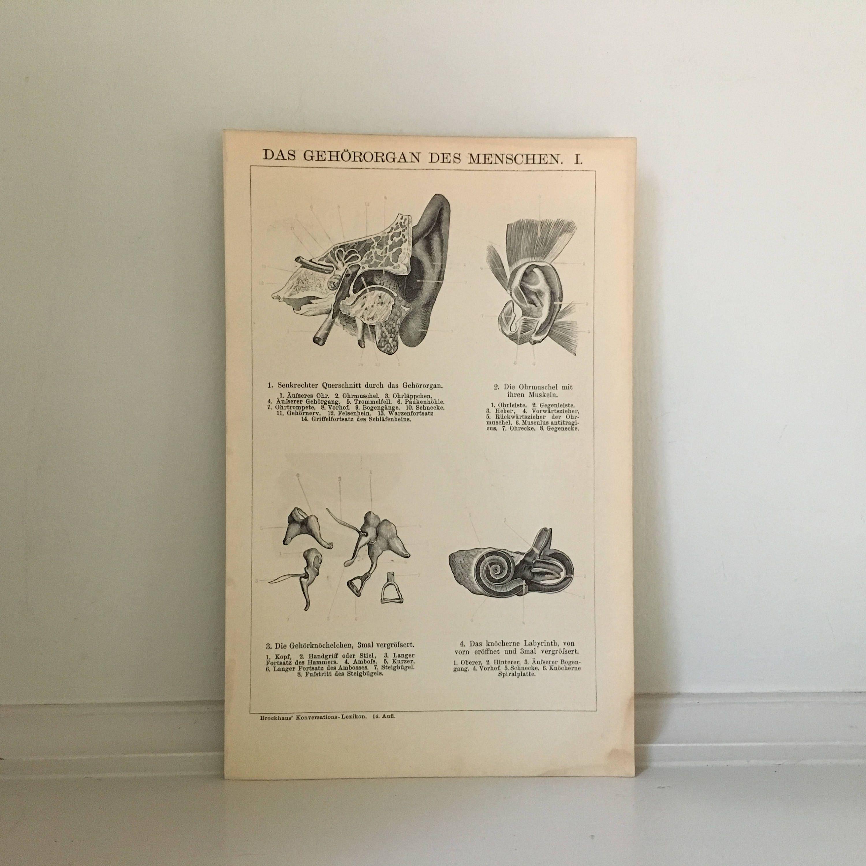 c. 1894 Ohr Druck Anatomie-Druck original antiken Druck | Etsy