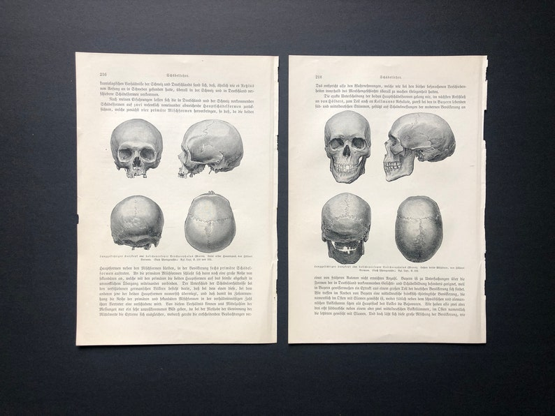 c. 1894 ANTIQUE SKULL PRINTS  set of 2 original antique image 0