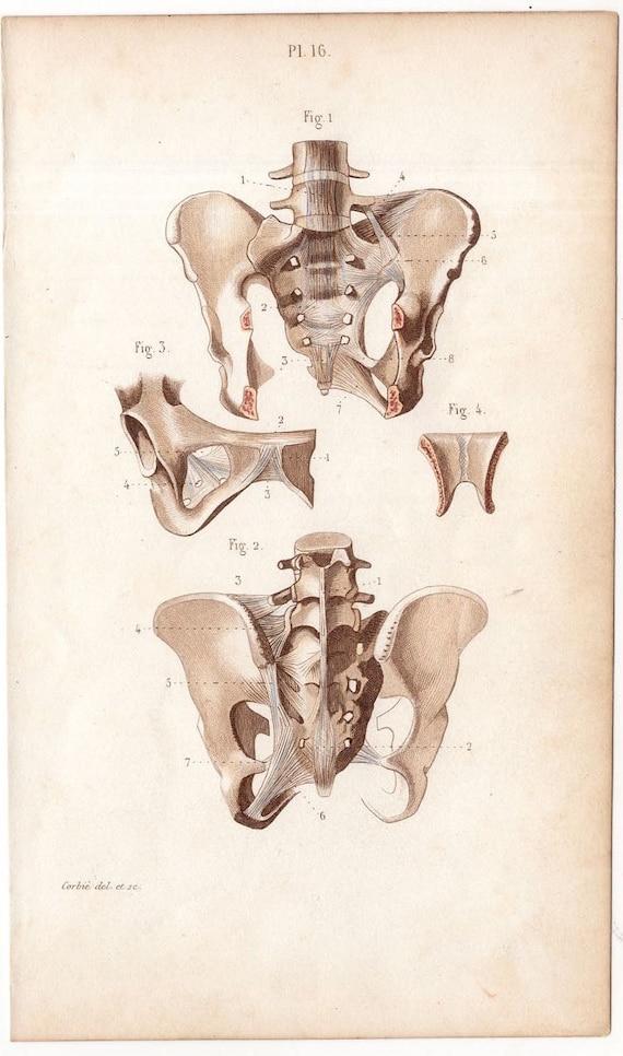 1846 Knochen Skelett menschliche Anatomie Gravur | Etsy