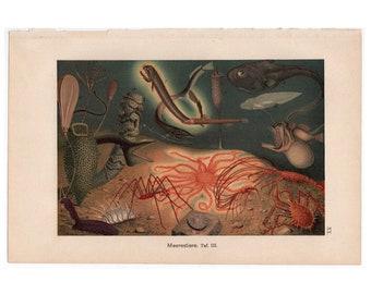 1890 DEEP SEA FISH lithograph - original antique print - marine ocean scene -  anglerfish dragonfish viperfish lanternfish - bioluminescence