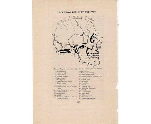 1934 Human Skull Diagram Print Original Vintage Anatomy Etsy