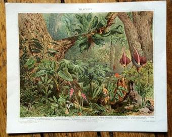 1894 FLOWERING PLANTS LITHOGRAPH -  original antique botanical print - tropical