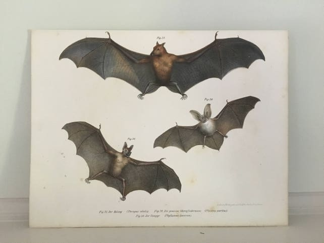 1860 antique bat lithograph assorted flying bats original etsy
