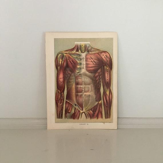 C 1903 Human Anatomy Print Interactive Medical Lithograph Etsy